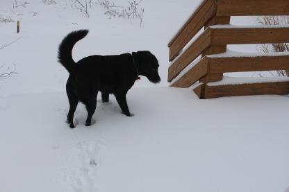 snowstorm john visit  2-17-1.JPG