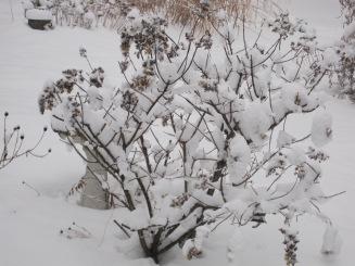 snow in winter 10-8.JPG