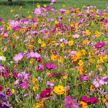 GSP Wildflowers Annuals - 1/4 lb bag