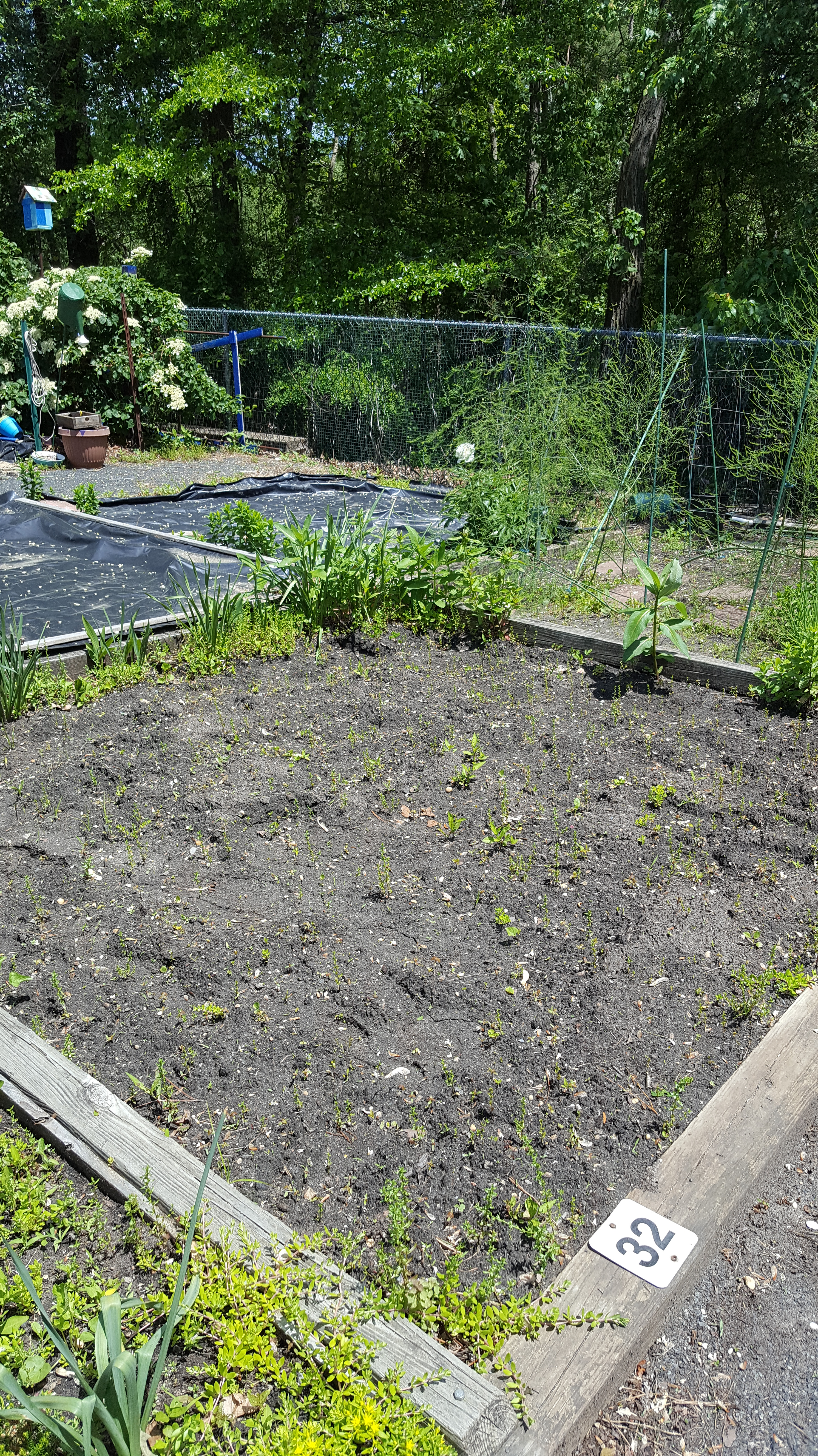 Square-Inch Gardening – May