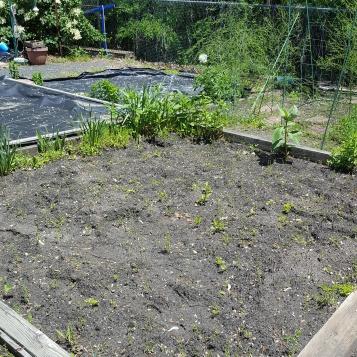 future garden 5-19 (2)