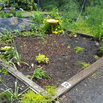 future garden 6-14-19 2