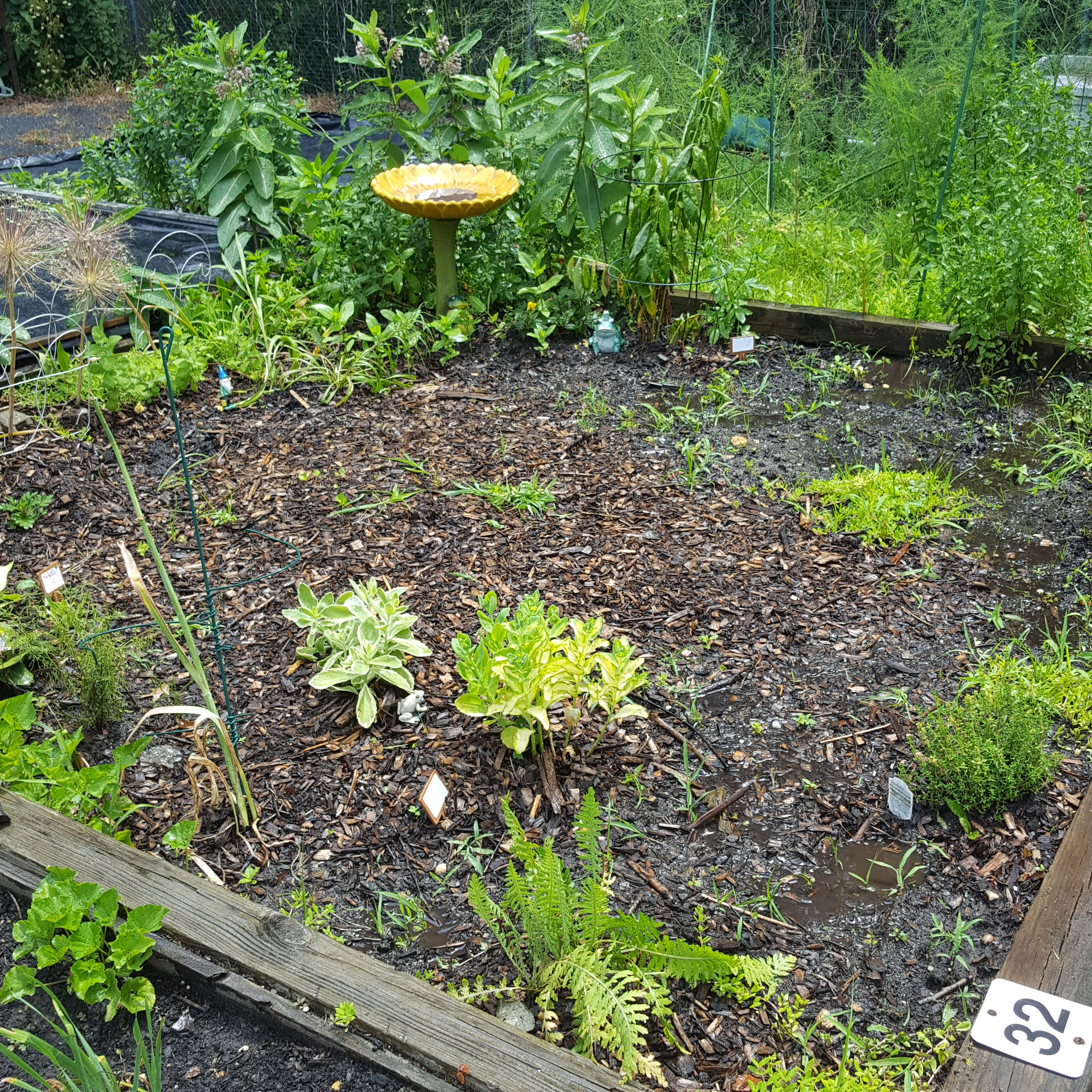 Square-Inch Gardening – June